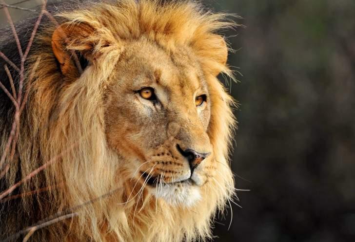 Камни для Льва (55 фото): какие талисманы подходят женщинам, оберег для мужчин, амулет по дате рождения и по знаку Зодиака