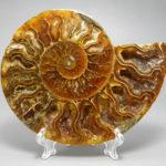 Камень аммонит